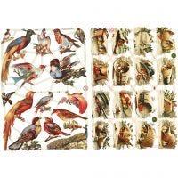 Vintage plaatjes, vogels, 16,5x23,5 cm, 2 vel/ 1 doos