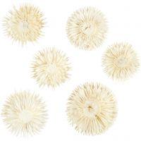 Gedroogde bloemen, d: 3-5 cm, 6 stuk/ 1 doos