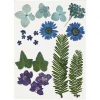 Gedroogde bloemen en bladeren, blauw, 19 div/ 1 doos