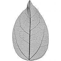 Skeleton leaves , L: 6-8 cm, zwart, 20 stuk/ 1 doos