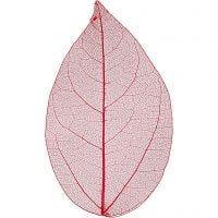 Skeleton leaves , L: 6-8 cm, rood, 20 stuk/ 1 doos