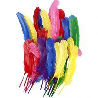 Veren, L: 20 cm, diverse kleuren, 36 stuk/ 1 doos