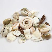 Strand schelpen kralen, afm 9-40 mm, gatgrootte 1-1,5 mm, 120 gr/ 1 doos