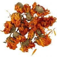 Gedroogde bloemen, Calendula, d: 1 - 1,5 cm, goud, 1 doos