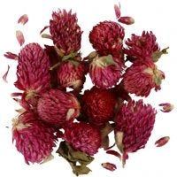 Gedroogde bloemen, Rode klaver, L: 1,5-2,5 cm, d: 1 - 1,5 cm, paars, 1 doos